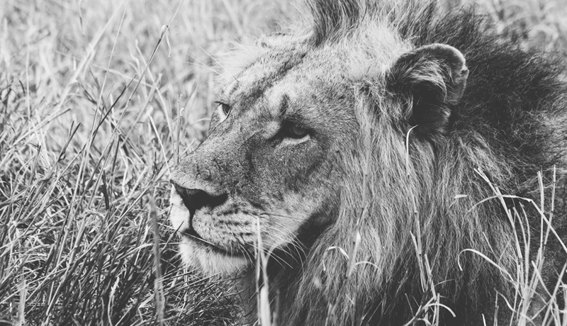 How a HubSpot Sales Lion(ess) Found Her Groove in 8 Weeks